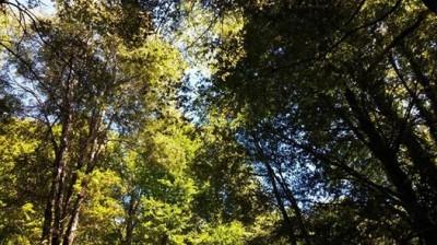 Vida Consciente II, el bosque vivo