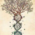 Cómo elaborar e interpretar tu árbol transgeneracional