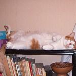 Este es MI mueble