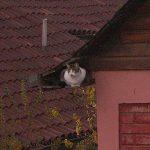 La vecina inquieta
