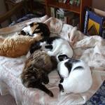Recuperamos nuestra cama…