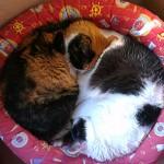 El ying y el yang…