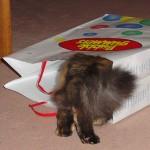 ¿Que la curiosidad qué cosa con los gatos?