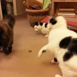 Catnip… entrada n° 1000 del blog!