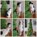 Diversión navideña por fin!…Momento… Buuu… No se mueven las bolitas