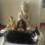 Me gusta Buda. Sabían?