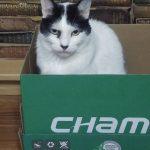 Uhmmm… Está cómoda esta caja