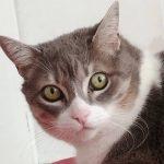 Soy Pelusa, dicen que soy una gatita senior. Esta humana me hace tratamientos de energía de una patita trasera mía que tengo herida.Las curaciones no se las aguanto