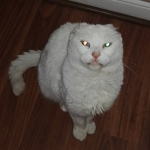 Por qué me dirán gata radiactiva?