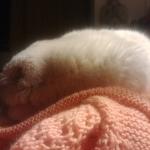 Amo dormir en los chalecos de humana, aunque reclama que se los daño al amasarlos