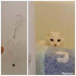 Creo que a humana no le gustó mi obra de arte en el baño