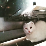 Humana descubrió mi escondite, debajo de la cocina