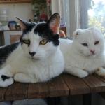 Nosotros dos seguimos aquí, preocupados por la gata mayor, pero ya la vemos que va mejorando